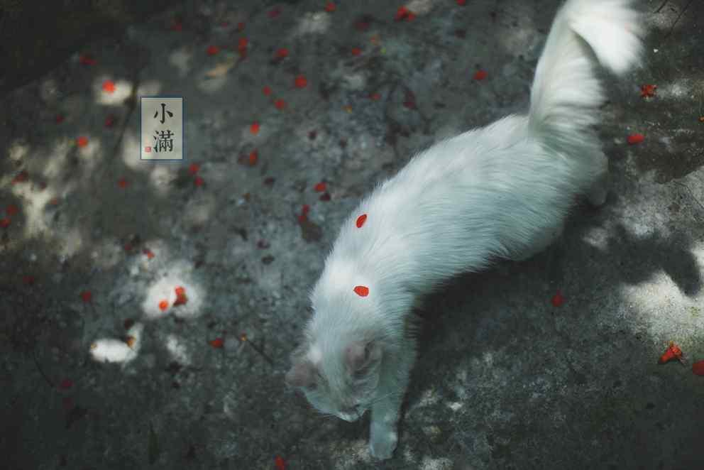 2017年小满节气猫咪动物壁纸