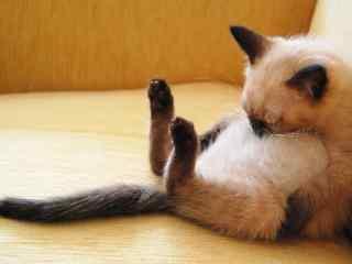 抱着自己睡着的猫咪桌面壁纸