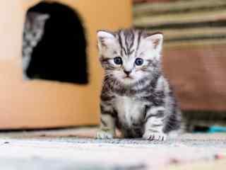 发呆的小奶猫高清壁纸