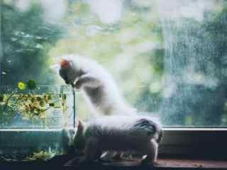 两只窗边玩耍的小奶猫桌面壁纸
