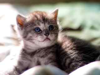 软萌的小奶猫高清壁纸