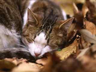 趴在落叶上睡觉的