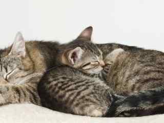 两只睡觉的小猫桌
