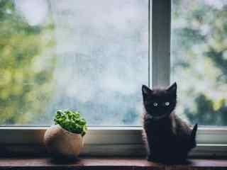 呆萌的黑色小奶猫桌面壁纸