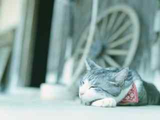 趴在地上睡觉的猫
