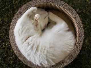 在篮子里睡着的猫