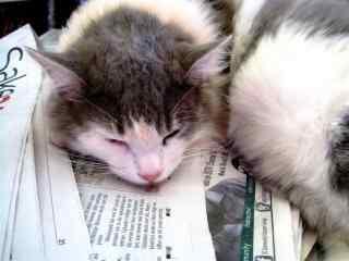 趴在报纸上睡觉的