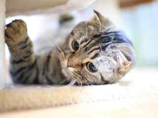 呆萌可爱的小猫咪高清壁纸