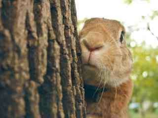 可爱的躲在树后的