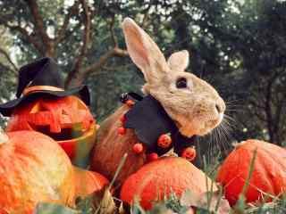 万圣夜乔装打扮的小兔子