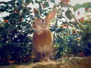 小树叶下的小兔子桌面壁纸