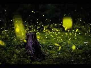夏日夜晚萤火虫桌面壁纸