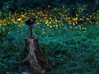 唯美的萤火虫桌面壁纸