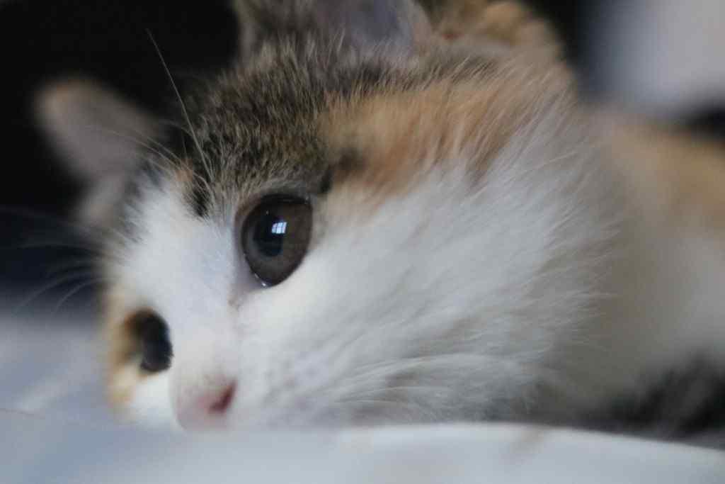 鼠标指针win8_萌萌哒小猫桌面壁纸 -桌面天下(Desktx.com)