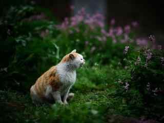 草地上的小猫桌面