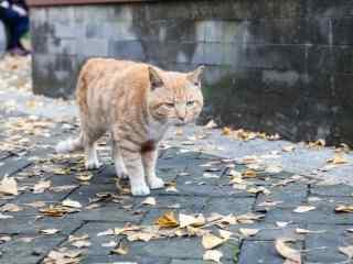 霸气行走的小猫桌