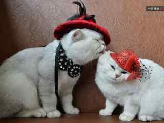 两只可爱搞怪的猫咪桌面壁纸