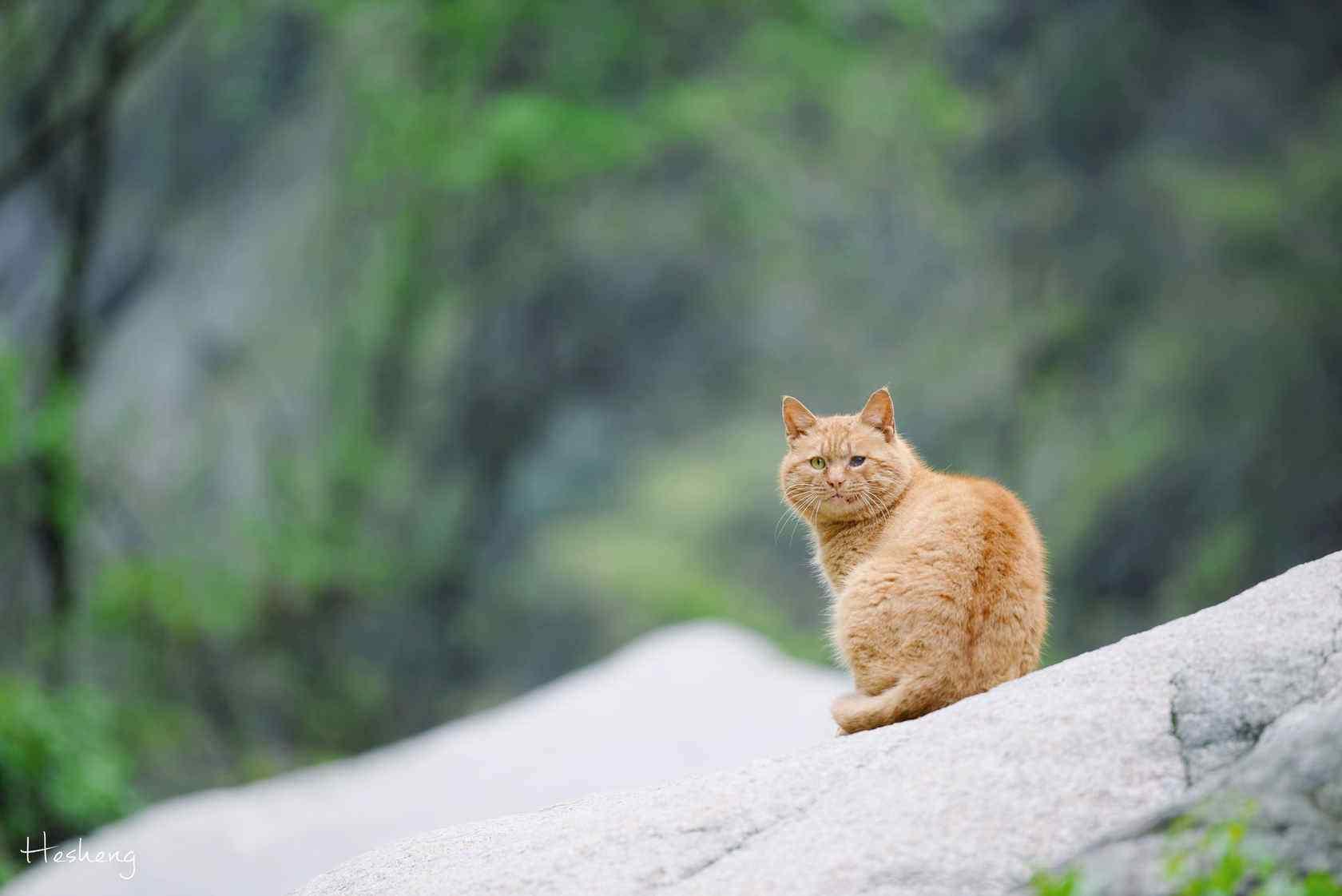华山上的可爱小橘猫桌面壁纸