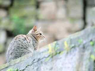 华山上的可爱猫咪桌面壁纸