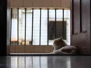 唯美意境好看的波斯猫桌面壁纸