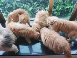 一群可爱猫咪吃食桌面壁纸