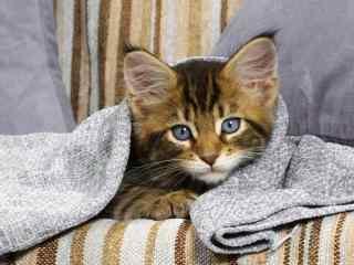 裹着可爱小被子的猫咪桌面壁纸