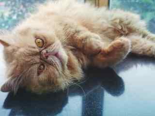 慵懒可爱的猫咪桌面壁纸