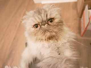 软萌可爱的猫咪桌面壁纸