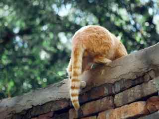 可爱的橘猫小屁股