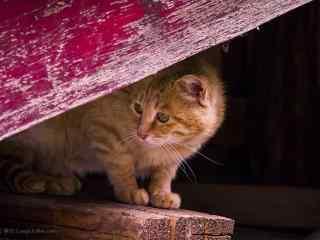和你玩躲猫猫的橘