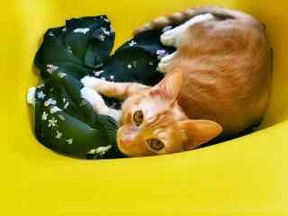 可爱呆萌的小橘猫