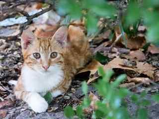 躲在树下的小橘猫桌面壁纸