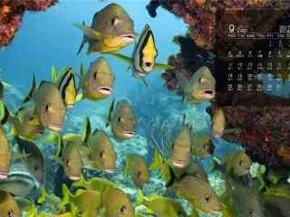 2017年9月日历深海鱼群桌面壁纸