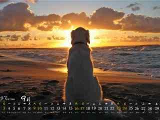 2017年9月日历黄昏沙滩上的狗狗壁纸