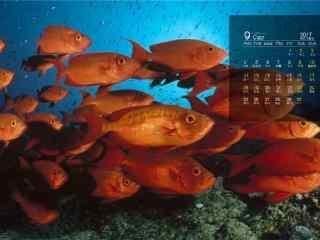 2017年9月日历海底鱼儿桌面壁纸
