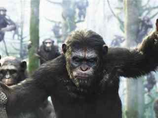 电影猩球崛起2黎明之战凯撒剧照图片