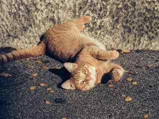 在地上打滚的猫咪