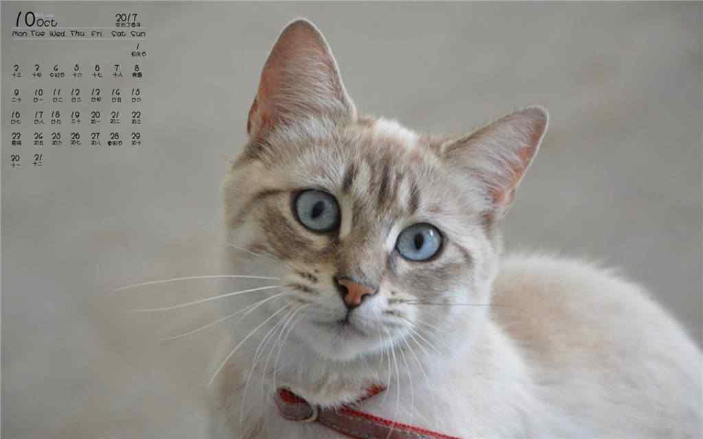 2017年10月日历猫咪图片壁纸