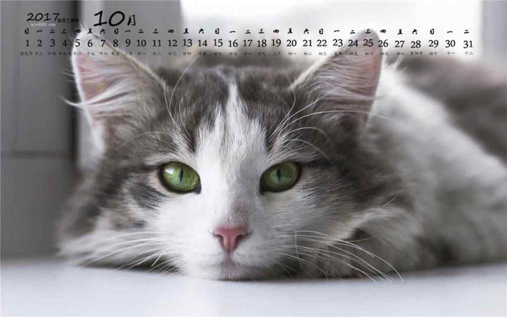 2017年10月日历可爱猫咪桌面壁纸