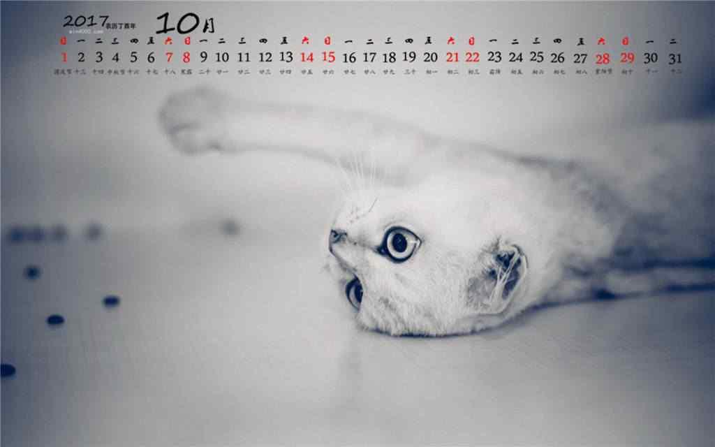 2017年10月日历软萌小猫桌面壁纸