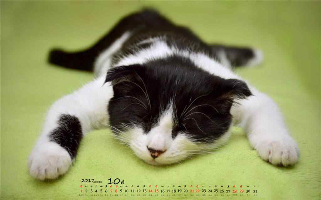 2017年10月日历萌萌的小猫桌面壁纸