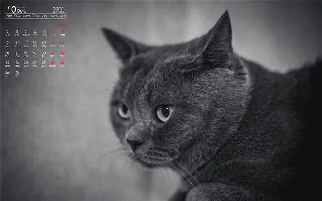2017年10月日历可爱小猫桌面壁纸