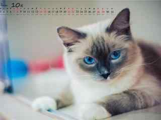 2017年10月日历可爱的小猫桌面壁纸