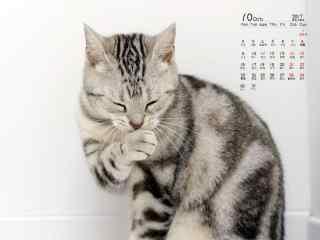 2017年10月日历猫咪桌面图片壁纸
