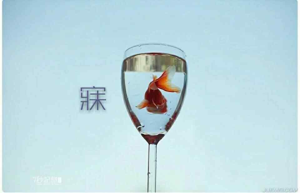 创意金鱼图片桌面壁纸