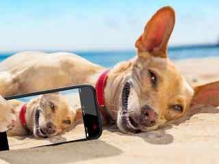 沙滩上可爱的狗狗