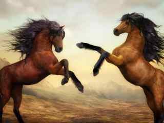 两匹骏马,野马,艺