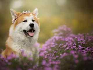 狗狗桌面壁纸可爱