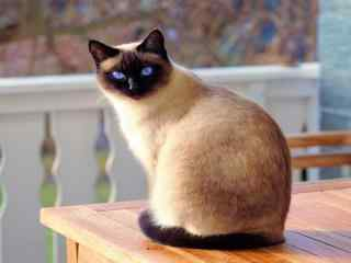 可爱奎罗猫高清桌