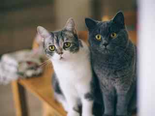 超萌可爱猫咪高清